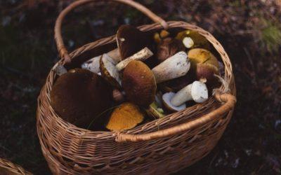 Autumn, cepes season in green Périgord